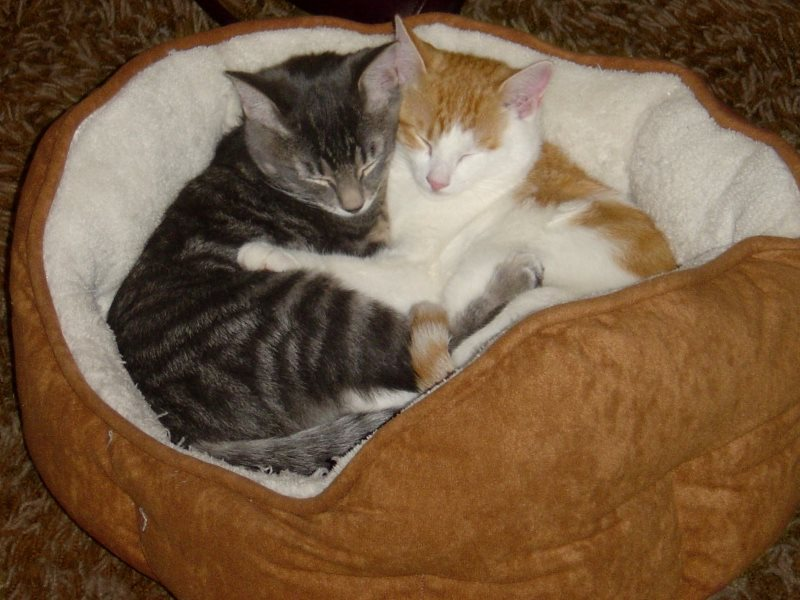Cute photo of two kittens hugging - from photos-public-domain.com